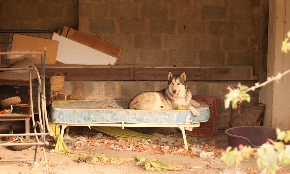 Dogs-in-artist-village-Sarraco-good-life-1000x600