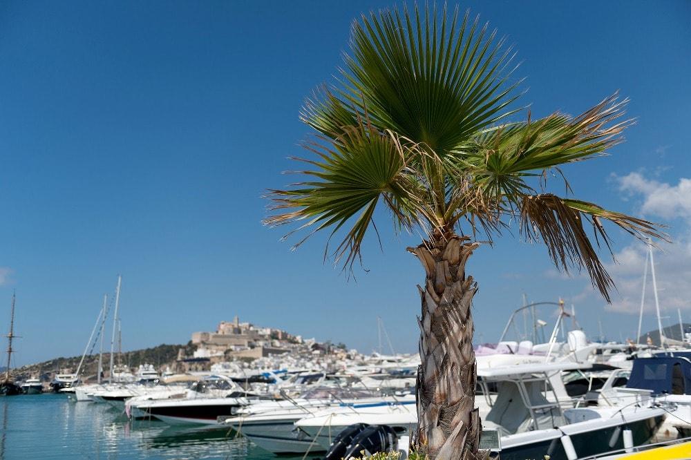 marina botafoch palm tree yachts ibiza