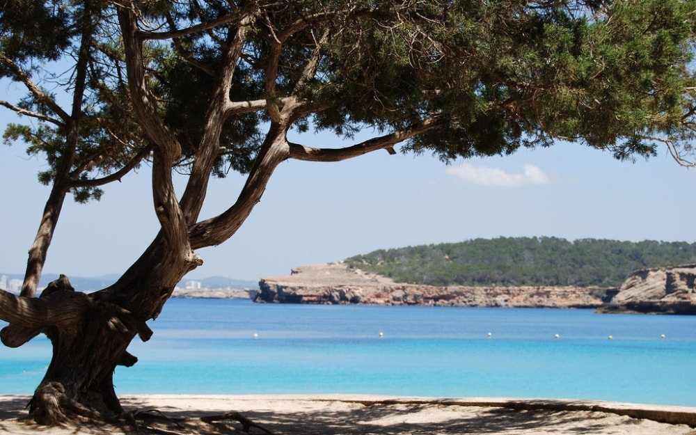 Sant Josep property market is surrounded by beautiful nature of Ibiza.
