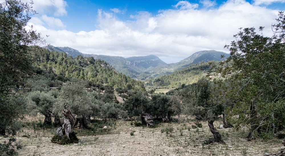 hiking tramuntana views valldemossa