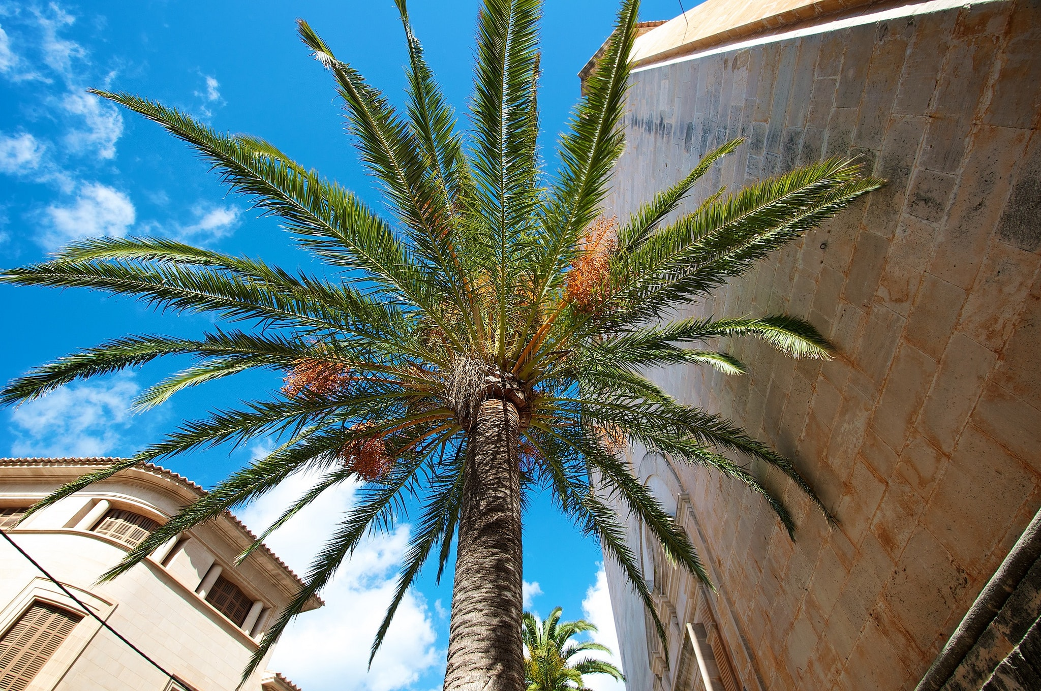 Santanyi Town property with palm.