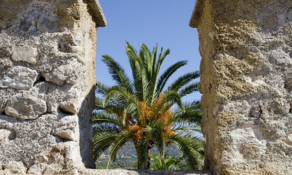 palm trees arta mallorca