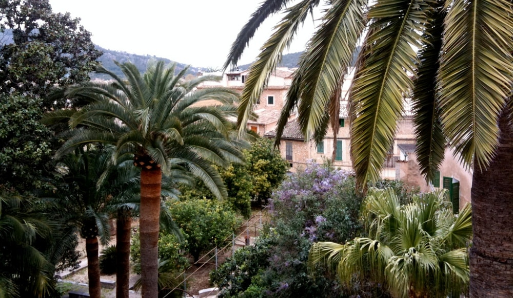 soller town estates palm trees mallorca