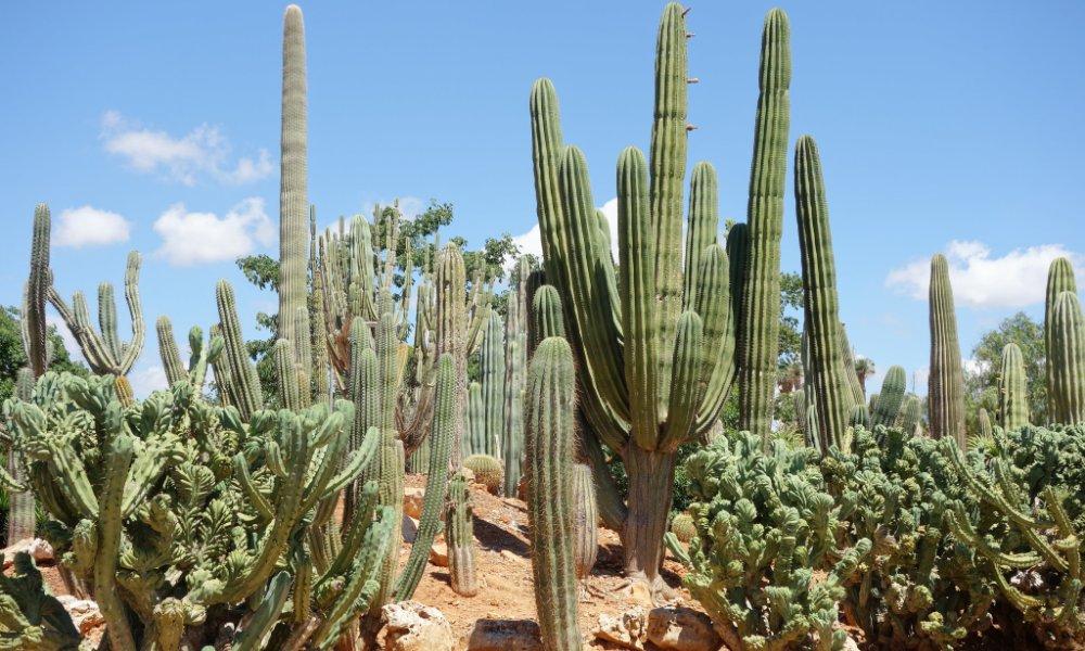 botanical-garden-botanicus-ses-salines-mallorca2