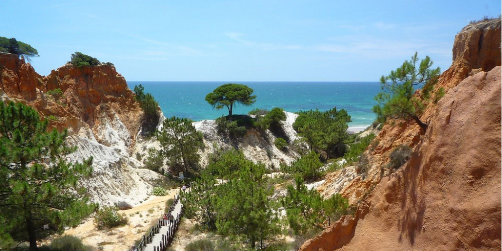 pine forest in albufeira property guide by casafari algarve portugal